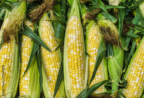 Fresh corn Fotobehang