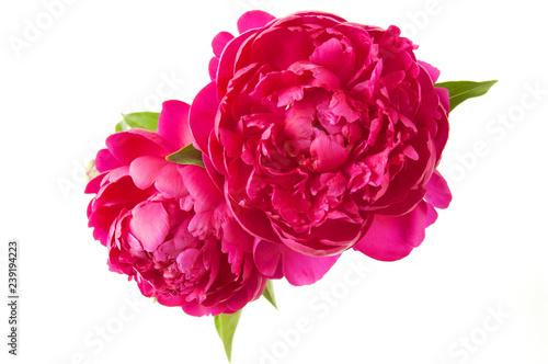 Stampa su Tela beautiful peony flowers