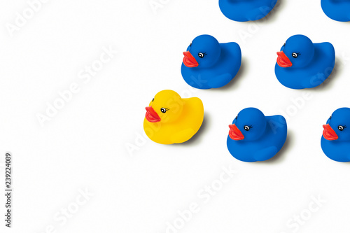 Group of blue toy ducks and one yellow duck in the head of the group on a white background Poster Mural XXL
