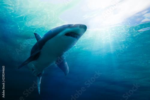 Photo Great white shark swimming underwater
