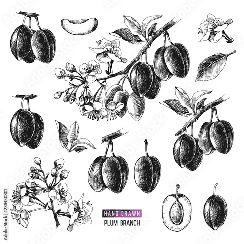 Photo Set of hand drawn plum branches with fruits and flowers