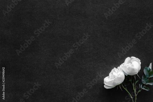 Fototapeta Fresh, white roses on black, dark background