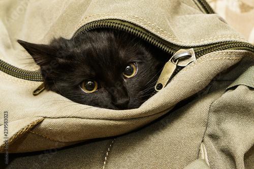 Black cat in backpack Fototapet