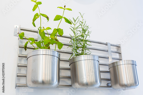Mint and theme plants in the kitchen