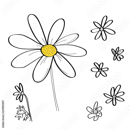 Vector set of daisy flower drawings. Fototapeta