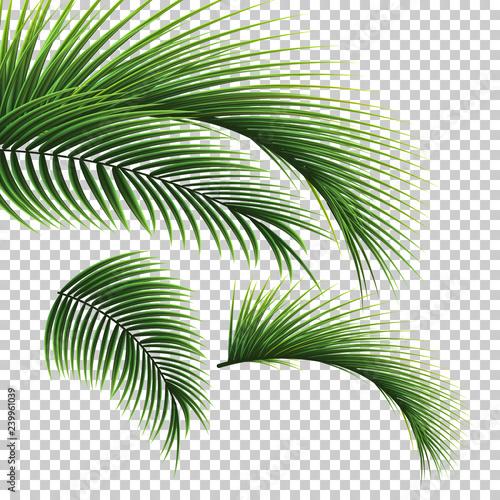 Obraz na płótnie Palm leaves