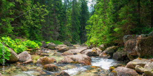 Mountain stream Tatras National Park Fototapet