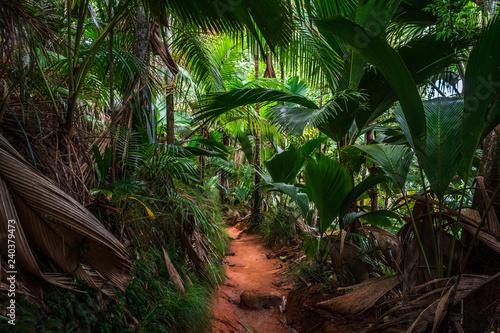 Stampa su Tela Forêt tropicale de la Vallée de Mai sur l'île de Praslin, Seychelles