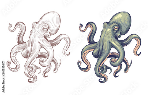 Foto Octopus