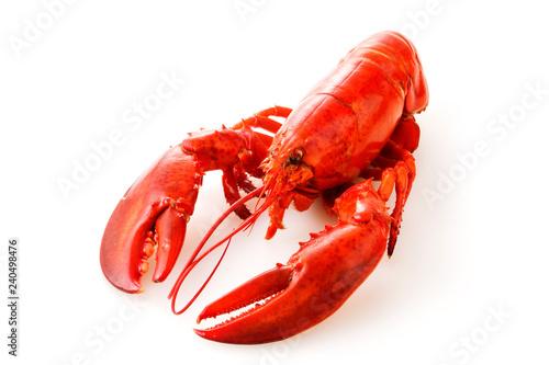 Fotografie, Obraz ロブスター Lobster