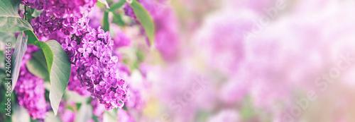 Valokuva purple lilac bush blossom with copy space