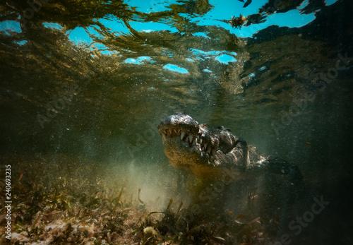 Wallpaper Mural Saltwater crocodile predator hiding in muddy water underwater shot