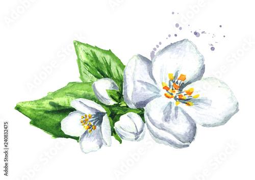 Wallpaper Mural White jasmine flowers