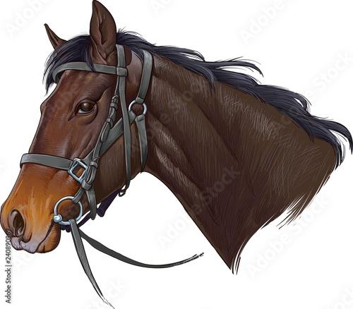 Fotografie, Tablou Horse head