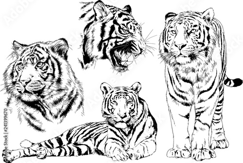 Obraz na plátně vector drawings sketches different predator , tigers lions cheetahs and leopards