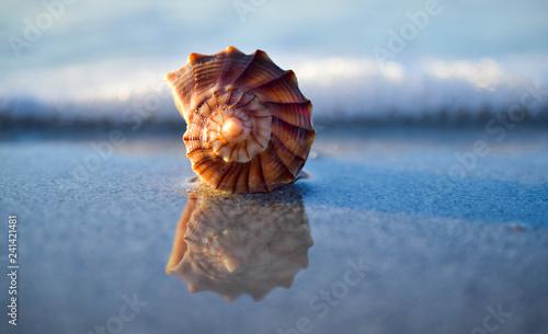 Fotografering Shell