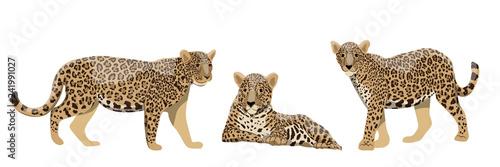 Obraz na plátne Set of wild cats jaguars or leopards in different poses