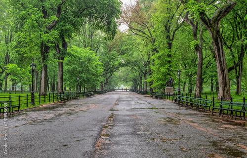 Valokuva Central Park, New York City in spring