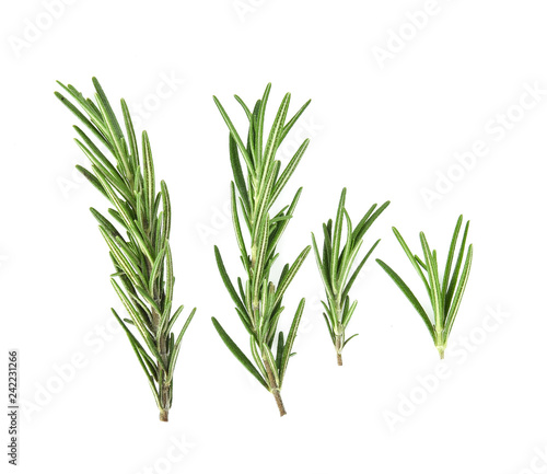 Obraz na plátně Top view of Rosemary isolated on white background