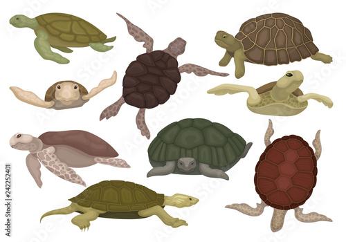 Sea and land turtles set, tortoise reptile animals in various views vector Illus Fototapeta