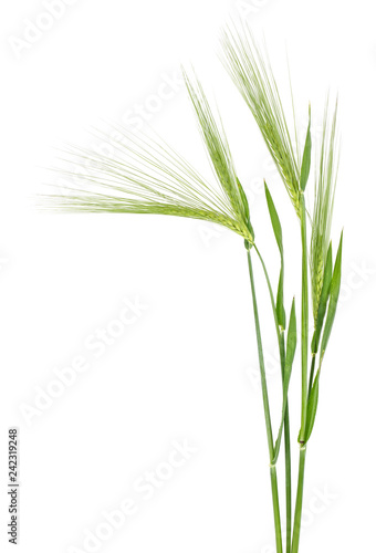 Tableau sur Toile Green spikelet of barley on white background