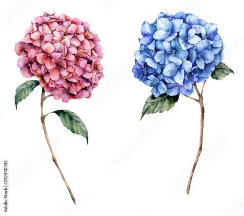 Obraz na plátne Watercolor pink and blue hydrangea set