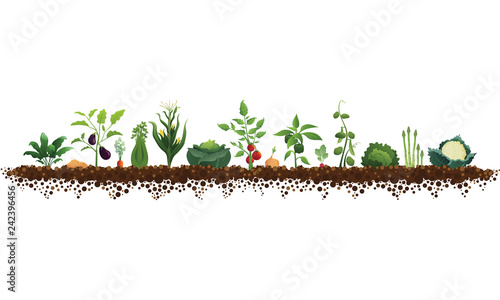 Fotografija Large Vegetable Garden Illustration