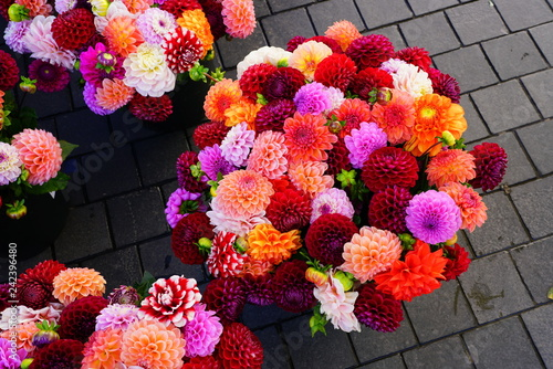 Photo Bright bunches of colorful pompom dahlia flowers at the market