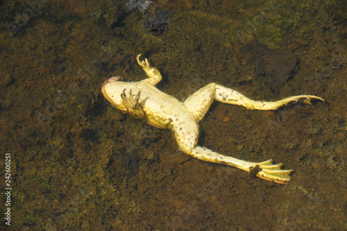 Dead frog in the pond