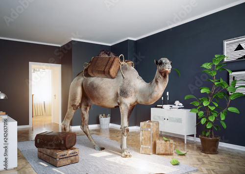 Stampa su Tela the camel in the room.