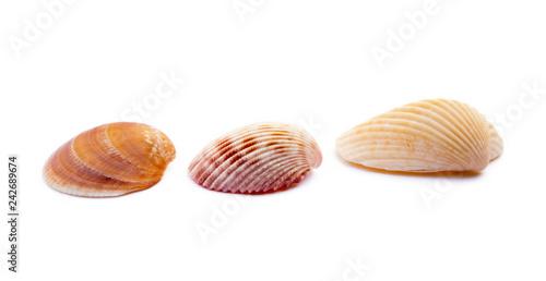 Exotic sea shells isolated on white background