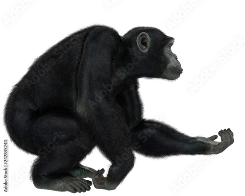 Valokuva chimpanzee in a white background