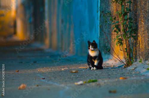 black and white stray cat sitting