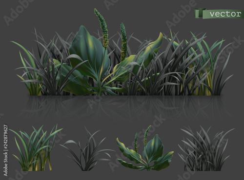 Wall mural Spring. Dark green grass, 3d realistic vector icon set