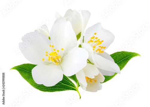 Stampa su Tela Jasmine flowers isolated on white background