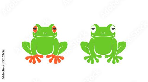 Fototapeta premium Czerwona żaba. Żaba nadrzewna. Na białym tle żaba na białym tle