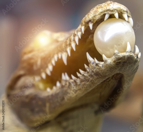 Pearl sunrise crocodile