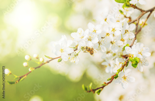 Spring season abstract nature background