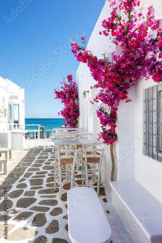 Fototapeta premium Typowa biała aleja z kwiatami oleandrów na Cykladach w Grecji latem