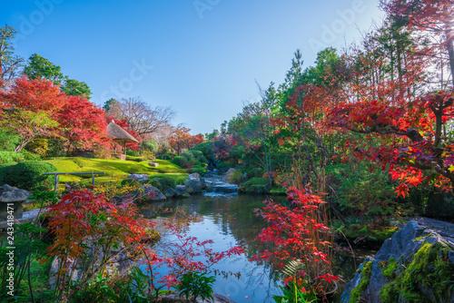 京都 妙心寺 退蔵院の紅葉 Fototapet
