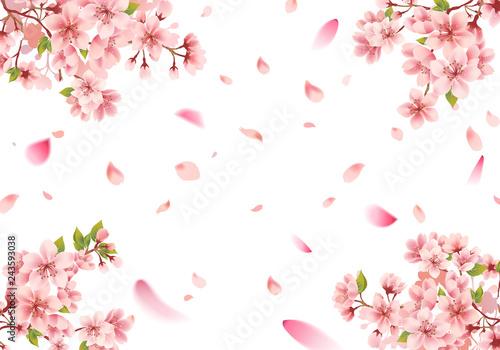 Fotografia Cherry blossom sakura frame on white background