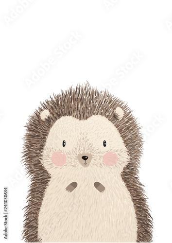 Fotografia, Obraz Cute image vector illustration of adorable hedgehog isolated on white background