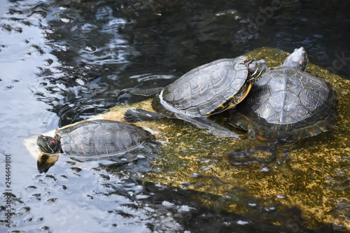 Turtle Pond at University of Texas in Austin
