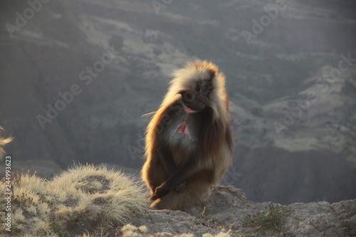 małpka siedząca na krawędzi skały w popołudniowym słońcu