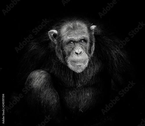 Fotografía baboon