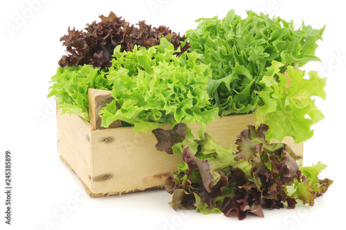 Stampa su Tela freshly harvested red and green curly  lettuce on a white background