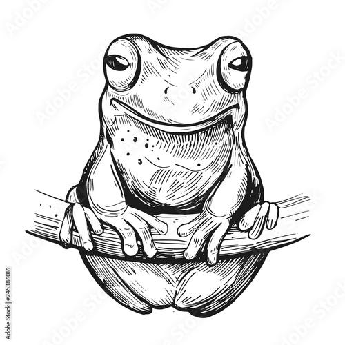 Fototapeta premium Sketch of frog. Hand drawn illustration. Vector. Isolated