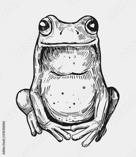 Fototapeta premium Szkic żaby. Ręcznie rysowane ilustracji. Wektor. Odosobniony