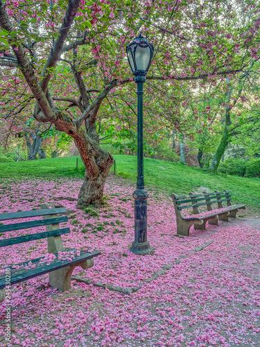 Fotografia Central Park, New York City in spring