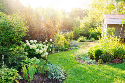 Canvas-taulu summer private garden with blooming Hydrangea Annabelle